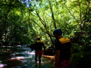 ジャングルの中、美しい沢をトレッキング