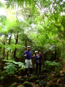 春の西表島の森