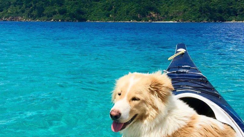 西表島の笑う犬