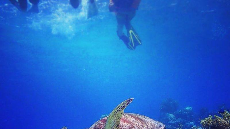今日も西表島の海はウミガメさんと会えました。
