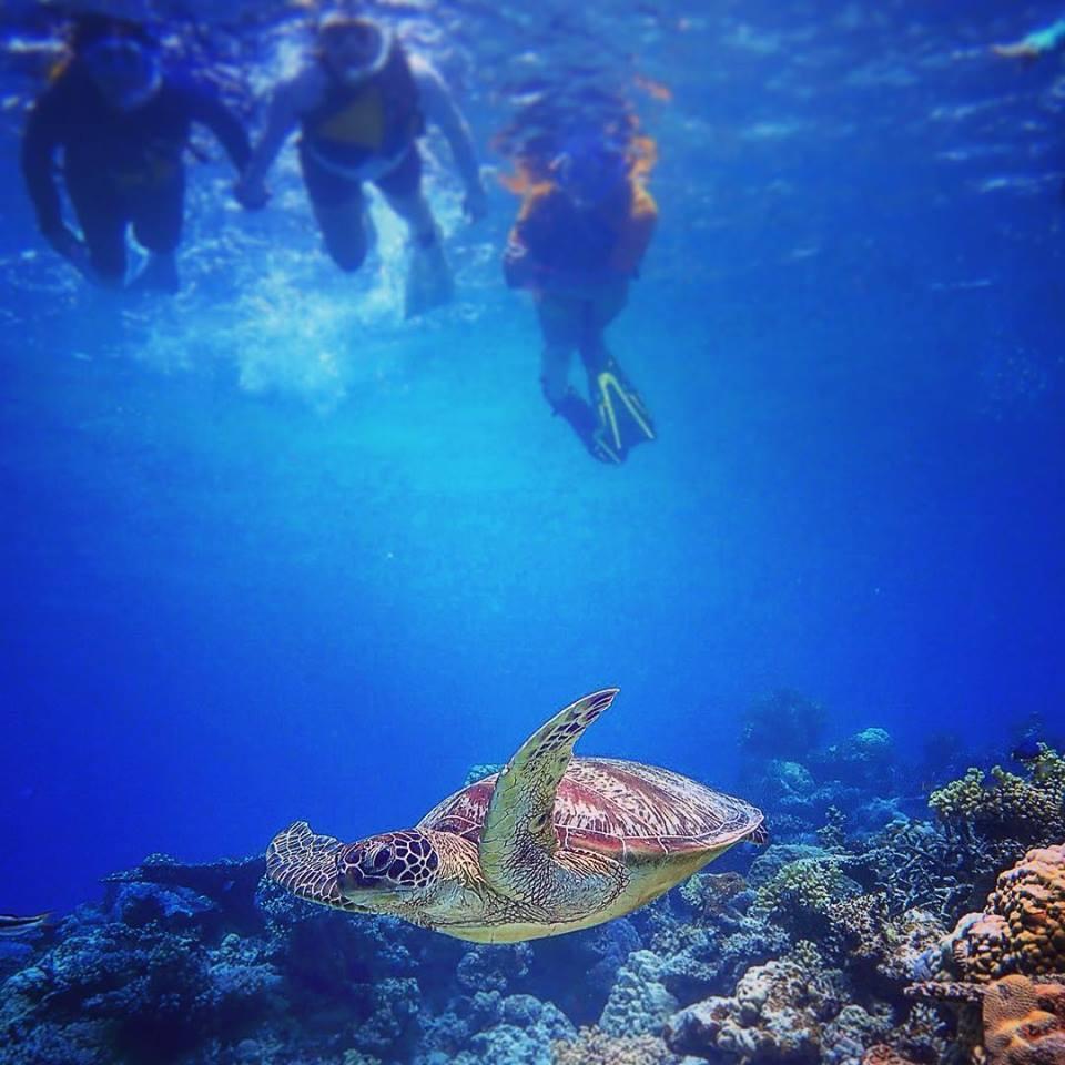 ウミガメが遊ぶ西表島の海