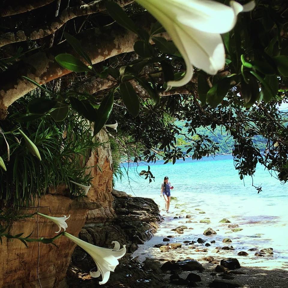 テッポウユリの咲くビーチ