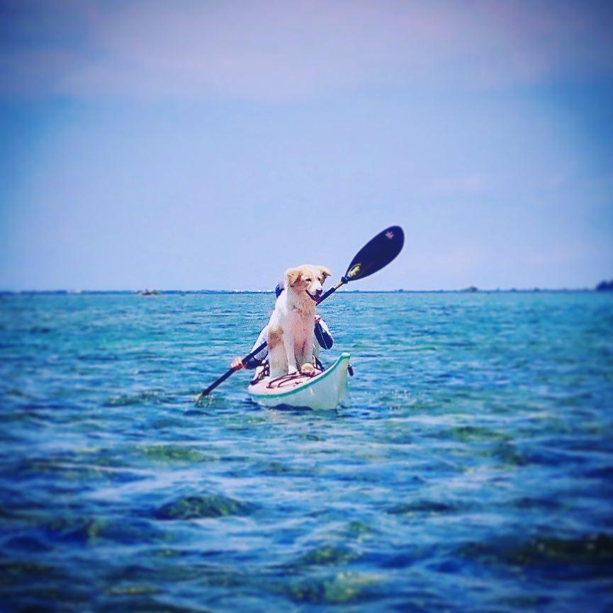 大きすぎるカヌー犬