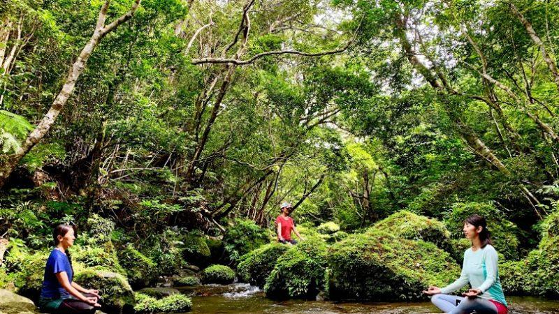 西表島の自然の中でヨガしませんか?女性向け新ツアーを始めます。
