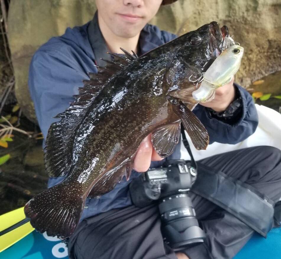 国内初確認の魚