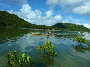 西表島ナカラ川のマングローブをカヌーで漕ぐ
