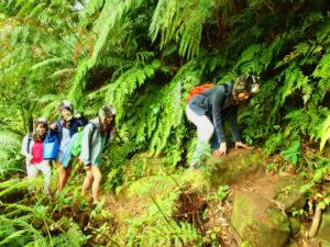 西表島ナーラの滝へのジャングルトレッキング