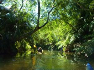美しいアダナデ川のジャングルの中をカヤックで行く。