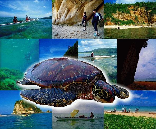 タカラジマとウミガメの泳ぐ海