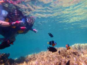 イダの浜で熱帯魚シュノーケリング