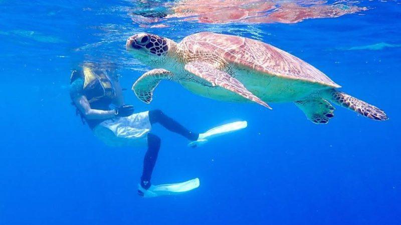 西表島でウミガメとシュノーケリング