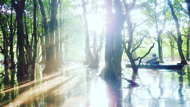 西表島の朝の光。おはようカヌー