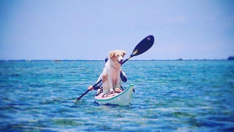 カヌー犬、邪魔になる