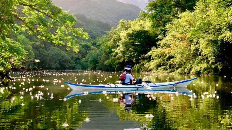 西表島のサガリバナは仲良川、そしてグッドアウトドアが一番!