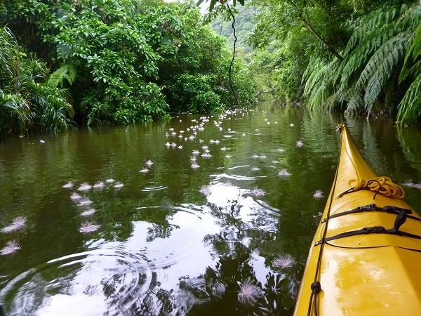 アダナデ川のサガリバナ